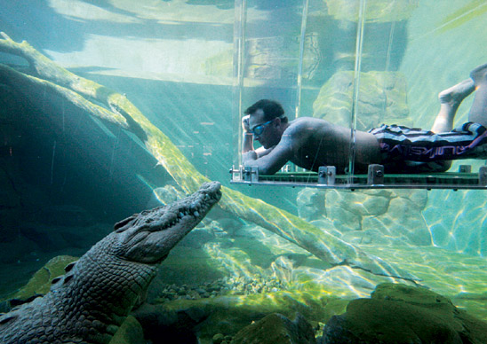 Underwater with the Crocodile